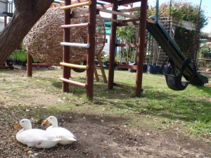 Ducks Jungle gyms and sand pit